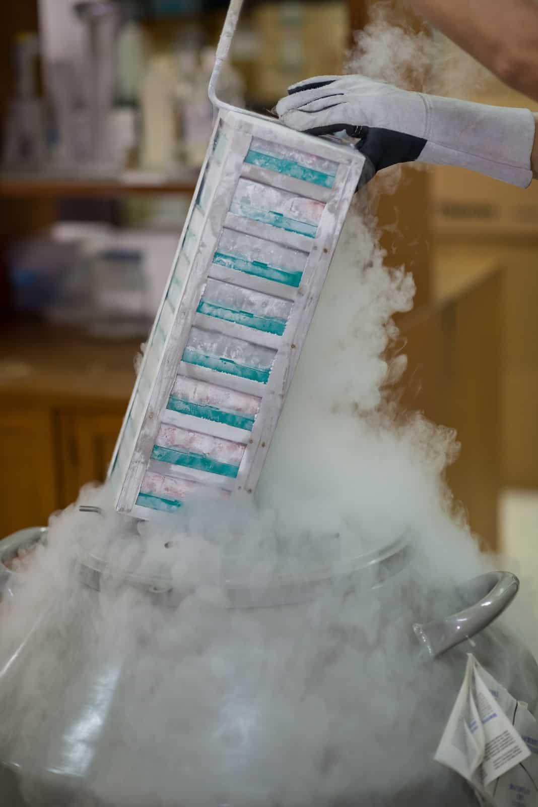 Rich Vaughn IFLG Blog: Ovary Cryopreservation