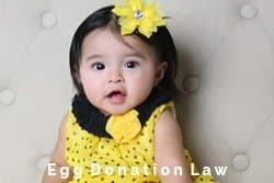 international-fertility-law-group-egg-donation-law-IFLG-SLIDER-FINAL.jpg